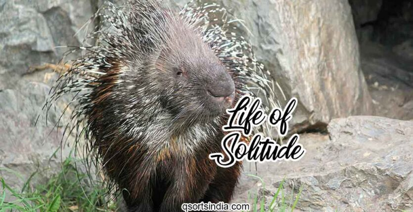 Can You Survive a Life of Solitude unlike the Porcupine?