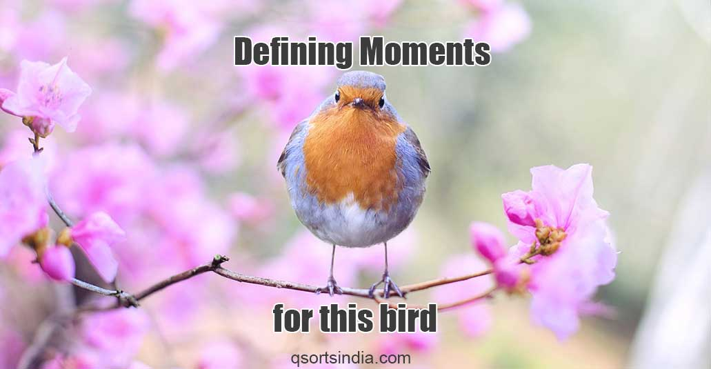 This is the Defining Moment of Every Bird's Life!