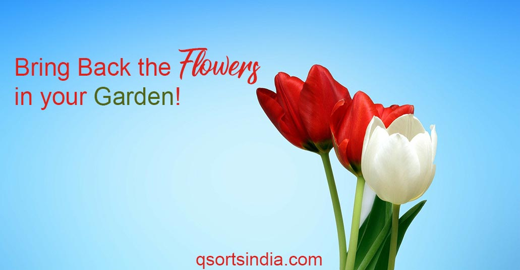 Bring Back the Flowers in your Garden!